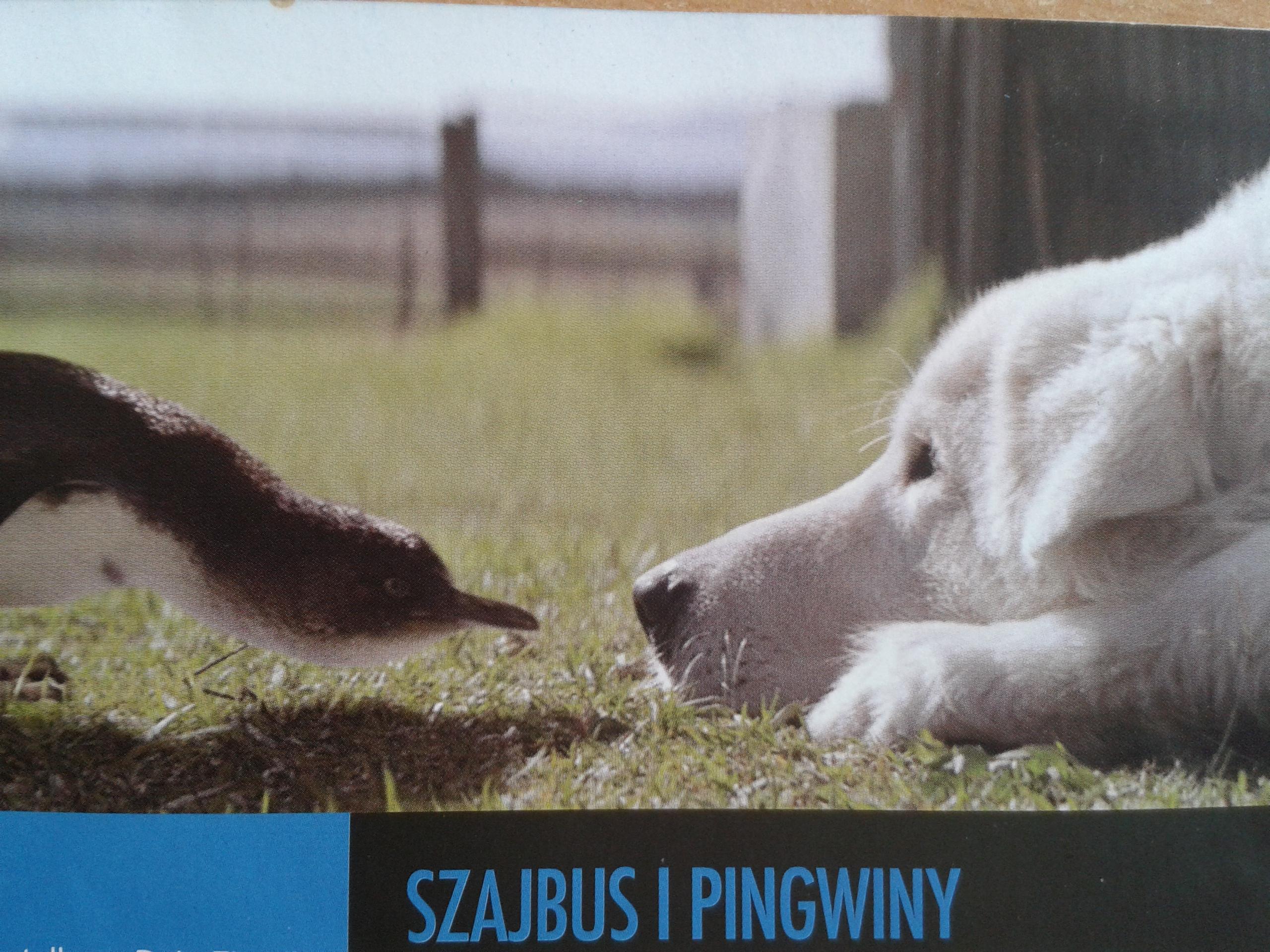 """Lekcja w kinie i projekcja filmu """"Szajbus i pingwiny"""", kl. I-III, 24 kwietnia 2017 r."""