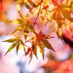 Konkurs fotograficzny: Jesienna Przyroda