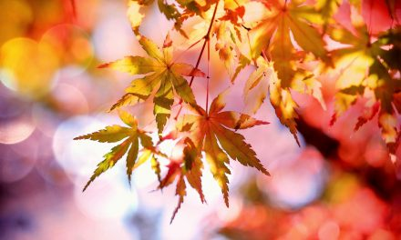 Konkurs Fotograficzny: Jesienna Przyroda – Wyniki