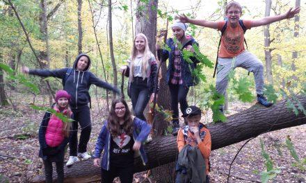Las, jesień, grzyby