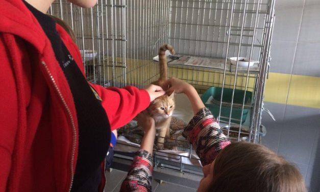 Przekazanie leków do Schroniska dla Bezdomnych Zwierząt